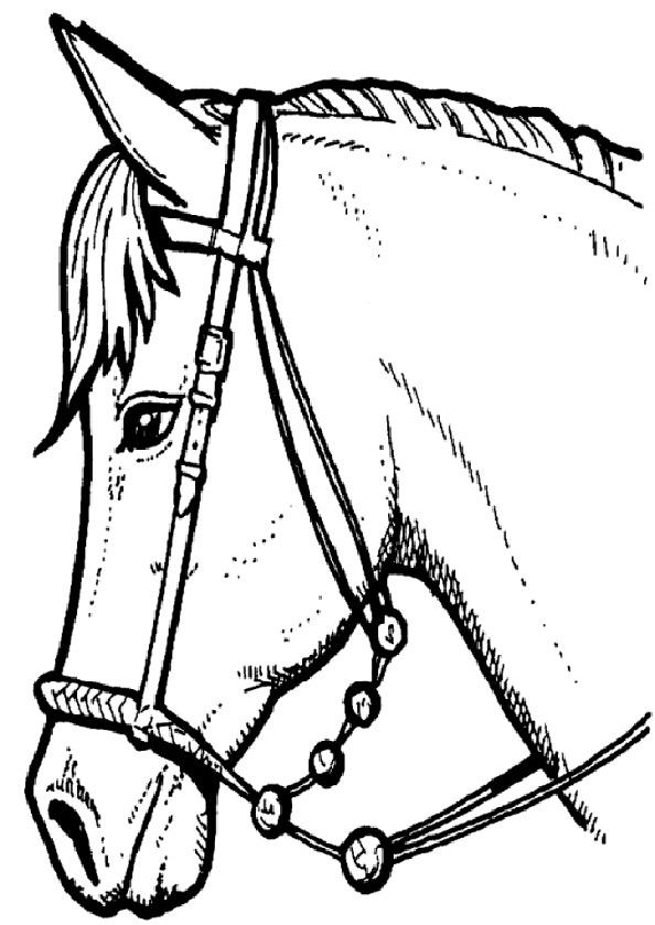 malvorlagen pferde 4