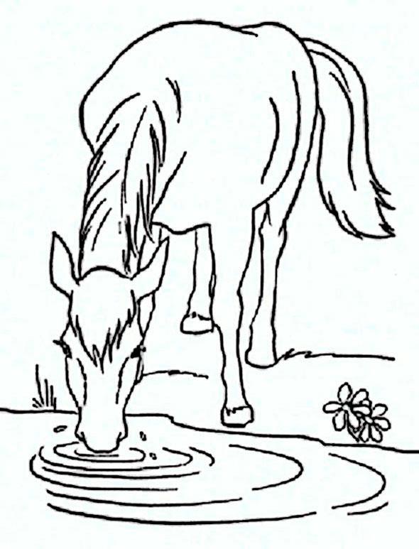 pferde 10 malvorlagen