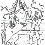 Pferde 13